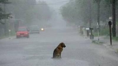 perro_lluvia